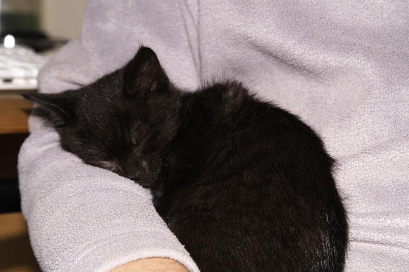 Twiglet asleep